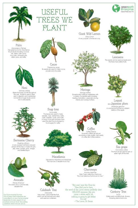 Resultado de imagen para useful trees